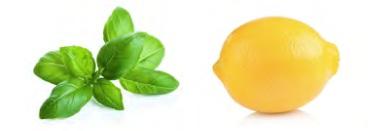 Albahaca y limon